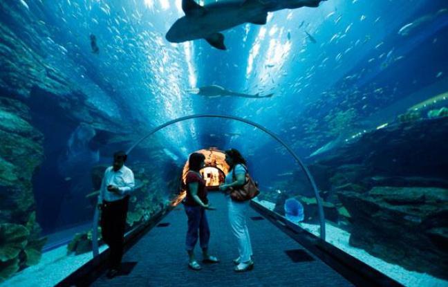 """Résultat de recherche d'images pour """"saint malo aquarium"""""""